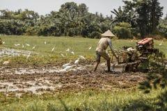 巴厘岛/印度尼西亚- 03 05 2018年:人犁与大的领域马达块 图库摄影