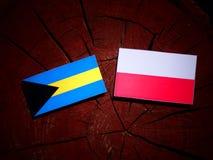 巴哈马下垂与在被隔绝的树桩的波兰旗子 皇族释放例证