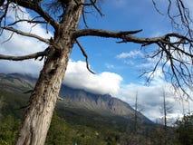 巴塔哥尼亚人的风景 库存照片