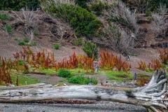 巴塔哥尼亚` s火地群岛国家公园华美的风景  免版税图库摄影