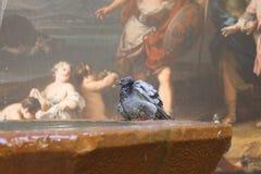 巴塞罗那鸽子和墙壁绘画 图库摄影