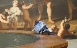 巴塞罗那鸽子和墙壁绘画 免版税库存照片