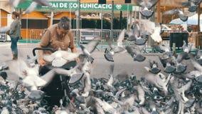 巴塞罗那,西班牙, 2017年9月22日:妇女喂养在街道上的鸽子 吃面包的鸟群户外在 影视素材