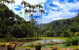 巴拉塔树胶,马提尼克岛海岛,法属西印度群岛庭院  图库摄影