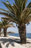 巴斯蒂亚,地平线,城堡,老镇,棕榈树,可西嘉岛, Corse,盖帽Corse,欧特Corse,法国,欧洲,海岛,夏天 免版税库存图片