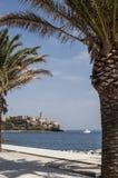 巴斯蒂亚,地平线,城堡,老镇,棕榈树,可西嘉岛, Corse,盖帽Corse,欧特Corse,法国,欧洲,海岛,夏天 图库摄影