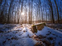 巴法力亚森林的冬天印象雪的 库存图片