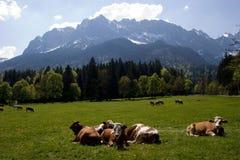 巴法力亚阿尔卑斯 免版税库存照片