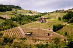 巴罗洛Langhe和Roero葡萄园小山 春天风景,Nebbiolo,Dolcetto,Barbaresco红酒 在山麓的葡萄栽培, 库存照片