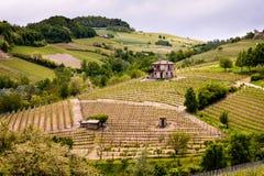 巴罗洛Langhe和Roero葡萄园小山 春天风景,Nebbiolo,Dolcetto,Barbaresco红酒 在山麓的葡萄栽培, 库存图片