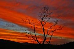 巴西夏天太阳火轨道 图库摄影