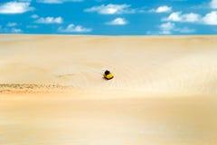 巴西新生儿童车的沙丘 库存照片