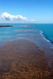 巴西珊瑚 免版税库存照片