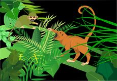 巴西绿色模仿松鼠猴属和猴子咆哮 库存图片
