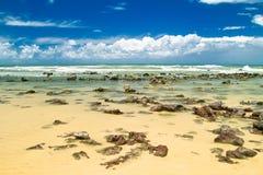 巴西自然池 免版税库存照片