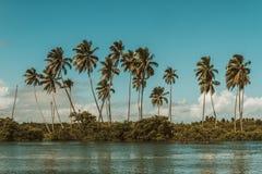 巴西震动 免版税图库摄影
