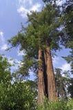 巴黎横向,结构树在Vincennes公园 免版税库存图片