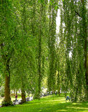 市内贫民区公园在夏天 免版税库存图片