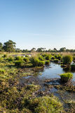 市分的边界与丛的草 免版税库存图片