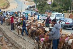 市场动物在埃塞俄比亚 库存照片