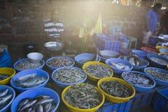市场在卖和买在冰袋的果阿鲜鱼 免版税库存图片