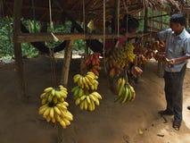 市场用香蕉在密林在柬埔寨 库存图片