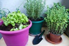 市场的芳香植物 图库摄影