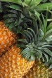市场菠萝 库存图片