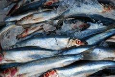 市场鱼 库存图片