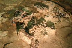 布万龙sirindhornae化石在诗琳通博物馆, Kalasin,泰国的 在完全化石附近 免版税图库摄影