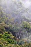 巴布亚新几内亚有薄雾的雨林 免版税库存照片