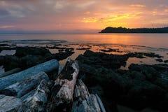 巴布亚新几内亚的本质 免版税库存照片