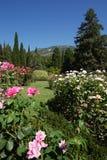 布什桃红色和白玫瑰在一座遥远的高山的背景的公园 库存照片