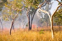 布什火在澳洲内地澳洲 免版税库存照片