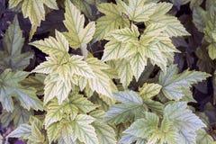 布什的被雕刻的绿色叶子在阳光下 库存照片