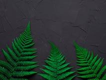 布局由绿色叶子制成 概念查出的本质白色 博客作者、杂志、社会媒介和艺术家的平的位置构成 顶视图 库存图片