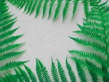布局由绿色叶子制成 概念查出的本质白色 博客作者、杂志、社会媒介和艺术家的平的位置构成 顶视图 库存照片