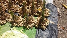 布干维尔岛市场 免版税图库摄影