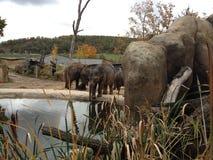 布拉格动物园 库存图片
