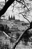 布拉格城堡,圣Vitus,布拉格大教堂  库存照片
