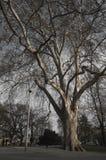 布拉格结构树 图库摄影