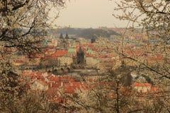 布拉格老镇在春天 免版税库存照片