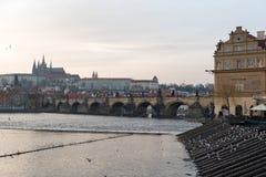 布拉格,捷克- 2016年3月14日:飞行海鸥和鸠在Vltana河海岸在布拉格,捷克语 老镇水塔和查尔斯K 库存图片