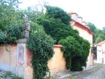 布拉格,有常春藤的,捷克墙壁街道  库存照片
