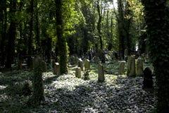 布拉格-新的犹太墓地 库存照片