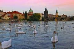 布拉格建筑学和圣查尔斯桥梁在捷克 图库摄影