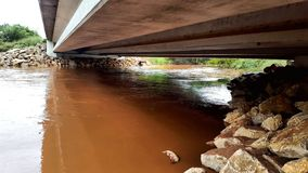 布拉索斯河的清楚的叉子在大雨以后的 库存图片