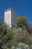 布拉索夫-在开花小山的塔 库存图片