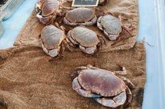 布料螃蟹鱼黄麻界面 免版税库存图片