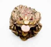 布朗与硬币的货币青蛙 库存图片